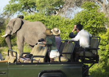 elephant_groupsafari_pEvlw