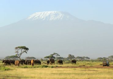 elephants_and_mount__958Fg