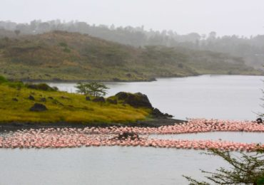 flamingos_at_arusha__nZcNq