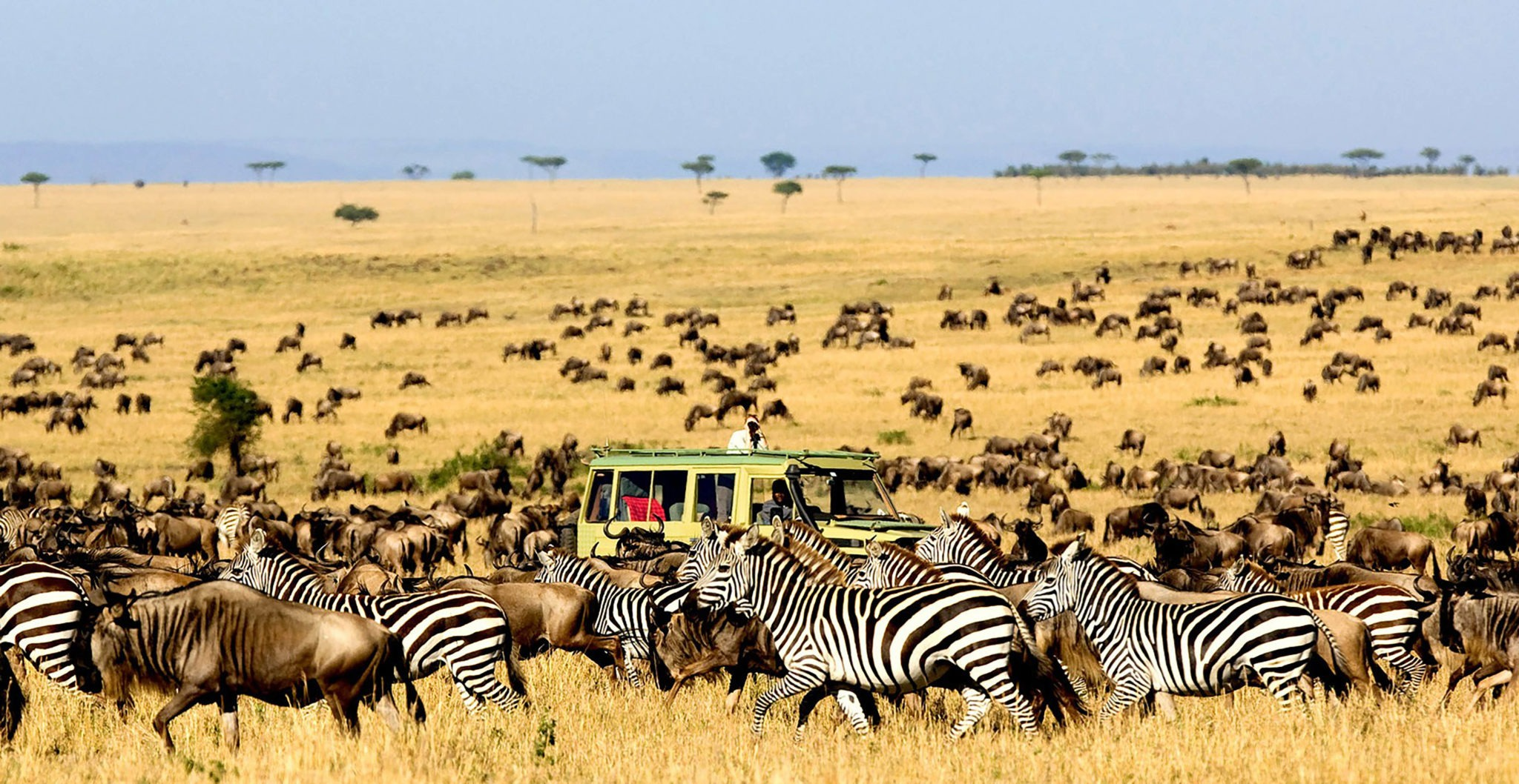 Wildebeest-Migration-Safari-Crossing-Mara-River-Safari-Tanzania-Mara
