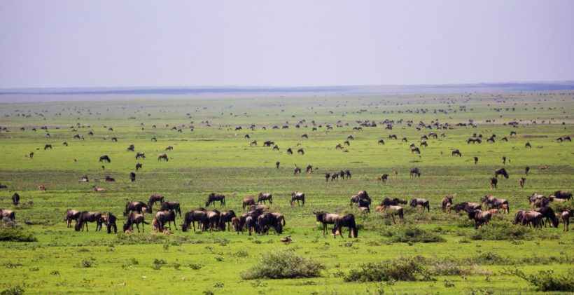 The-Great-Migration-Wito-Africa-Safaris