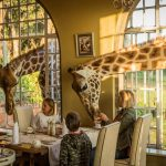COVID-19 Update | Stay Home, Travel Later | Wito Africa Safaris