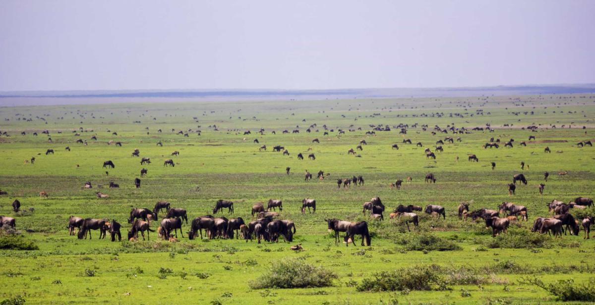 serengeti national p bN9Uz